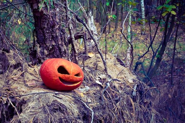Czerwona dynia halloween w jesiennym lesie na starym pniu i stercie igieł z choinek