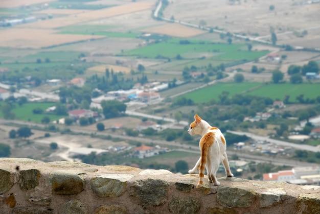 Czerwona i biała kot pozycja na ścianie