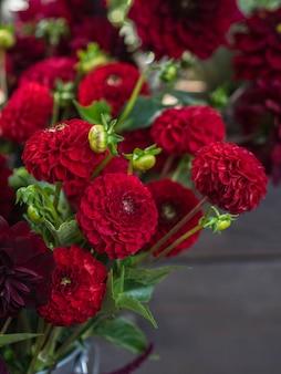 Czerwona ogrodowa dalia kwitnie na ciemnym tle