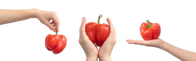 Czerwona papryka słodka w ręce kobiety na białym tle na białym tle. warzywo w ręku, projekt transparentu. zdjęcie koncepcji zdrowej żywności