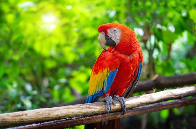 Czerwona papuga ara przykleja się do gałęzi