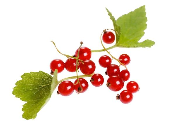 Czerwona porzeczka na białym tle. pojęcie zdrowego odżywiania, żywności dla niemowląt, weganizmu, wegetarianizmu, surowej żywności. widok z góry, układ płaski. skopiuj miejsce.