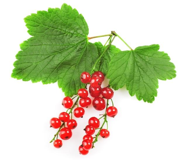 Czerwona porzeczka z liściem na białym tle