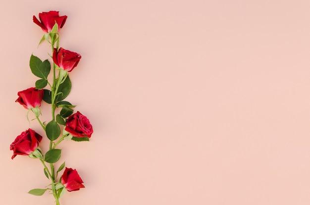 Czerwona róża kwiaty w płaskiej leżał