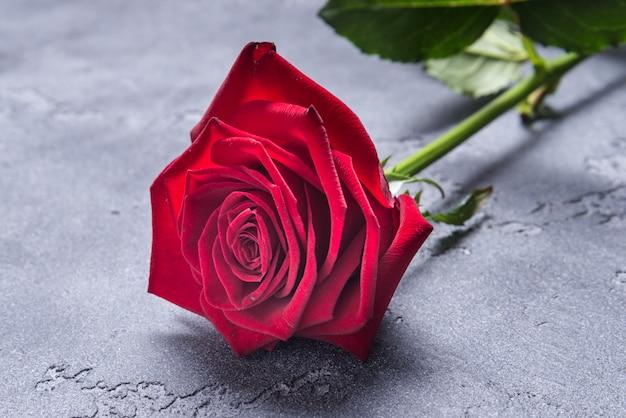 Czerwona róża na tle greay