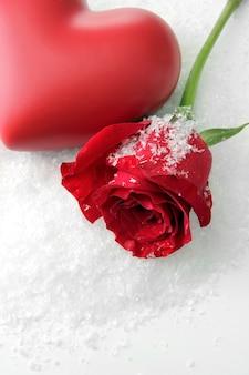 Czerwona róża na tle śniegu