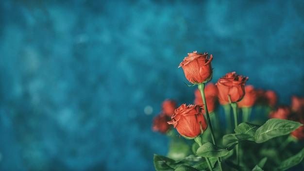 Czerwona róża tło z copyspace