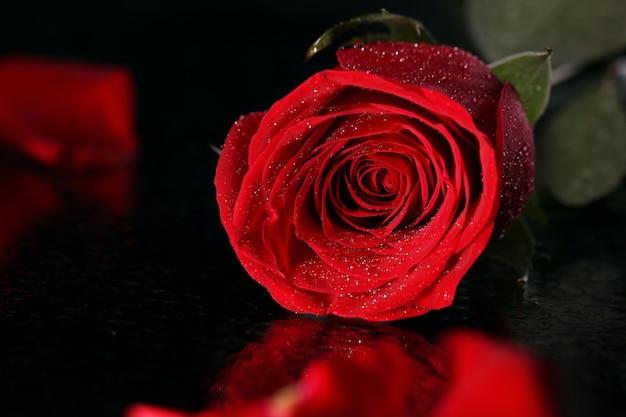 Czerwona róża w ciemności