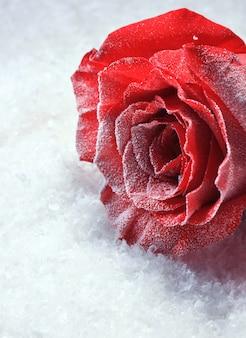 Czerwona róża w lodzie na tle śniegu