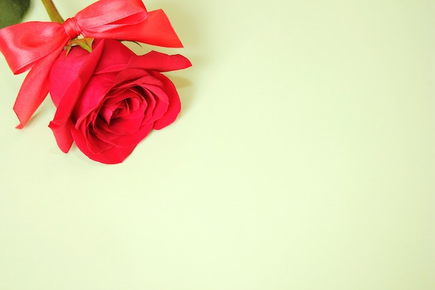 Czerwona róża z kokardą