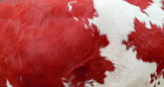 Czerwona skóra bydlęca tekstury. rolnictwo. gładka powierzchnia.