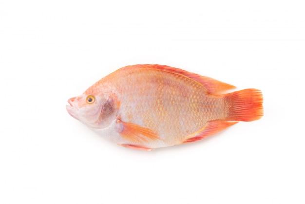 Czerwona tilapia ryba na odosobnionym białym tle
