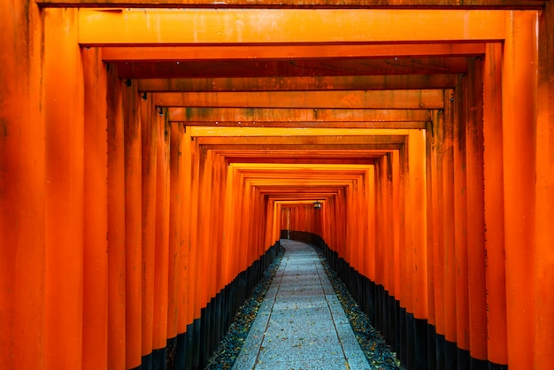 Czerwona tori brama przy fushimi inari świątynią w kyoto, japonia.