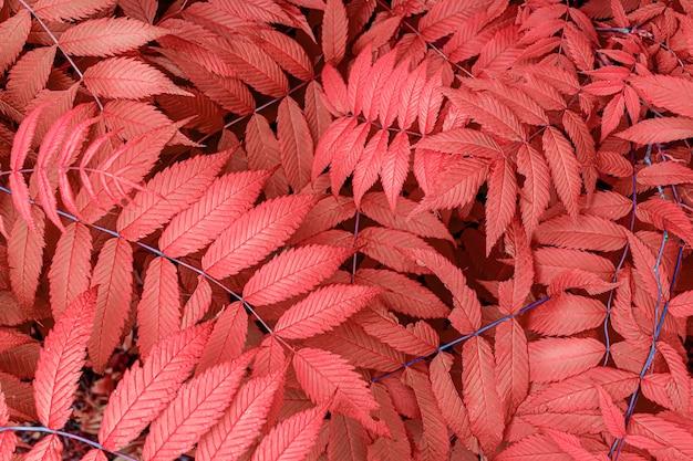 Czerwone, ciepłe, pomarańczowe jesienne liście w tle