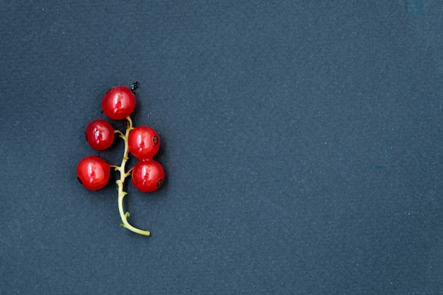 Czerwone dojrzałe porzeczki na ciemnym tle. kropelki wody.