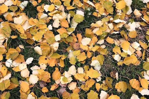Czerwone i pomarańczowe jesienne liście tło. kolorowe tło wibrujący tekstury z miejsca na tekst. koncepcja sezonu jesiennego. jesienny zimny deszczowy dzień