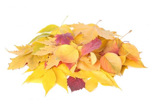 Czerwone i pomarańczowe jesienne liście