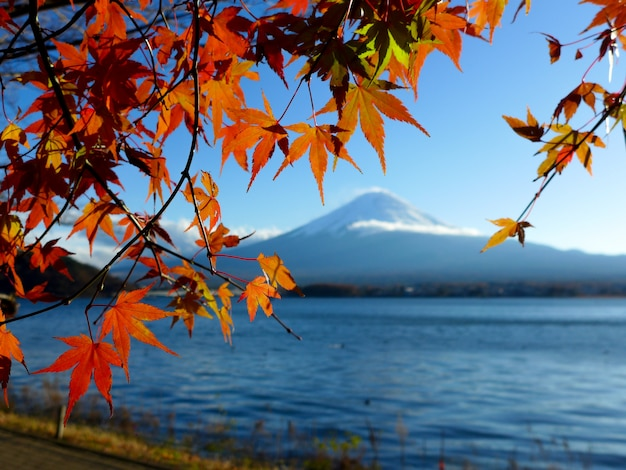 Czerwone i żółte liście klonu na tle góry fuji mountain kawaguchiko lake, japan