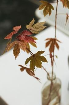 Czerwone i żółte liście klonu w wazonie