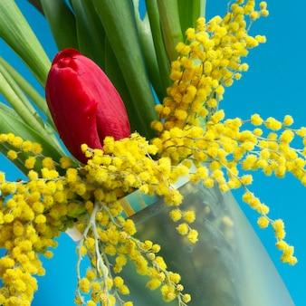 Czerwone i żółte tulipany i żółta mimoza na niebieskim tle. wiosenne kwiaty na 8 marca. kwiatowy baner