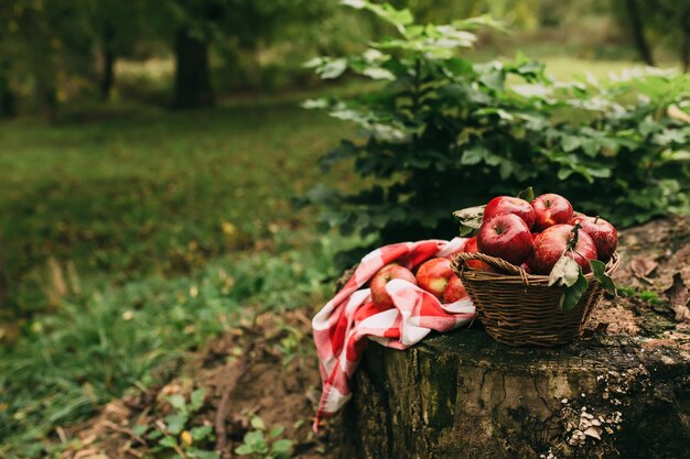 Czerwone jabłka w koszu, jesienny ogród, czas żniw