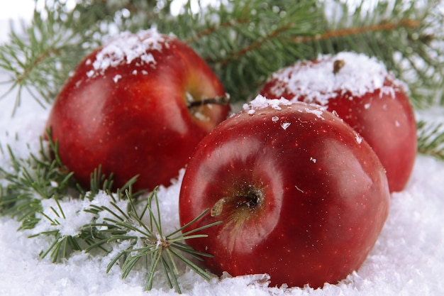 Czerwone jabłka z gałęziami jodły w śniegu z bliska
