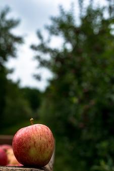 Czerwone jabłka zebrane z gospodarstwa i wyselekcjonowane w pudełku, gotowe do sprzedaży. produkt ekologiczny.