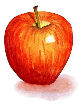 Czerwone jabłko soczyste owoce ekologiczne jesienne zbiory akwarela ilustracja izolowany na białym tle