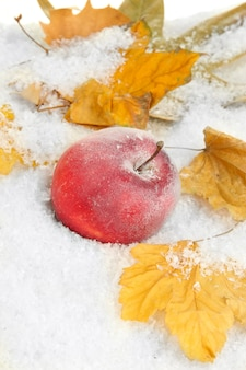 Czerwone jabłko w śniegu z bliska