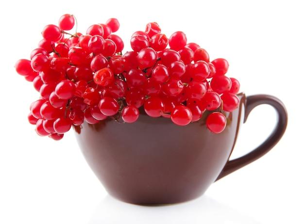 Czerwone jagody kaliny w filiżance, na białym tle