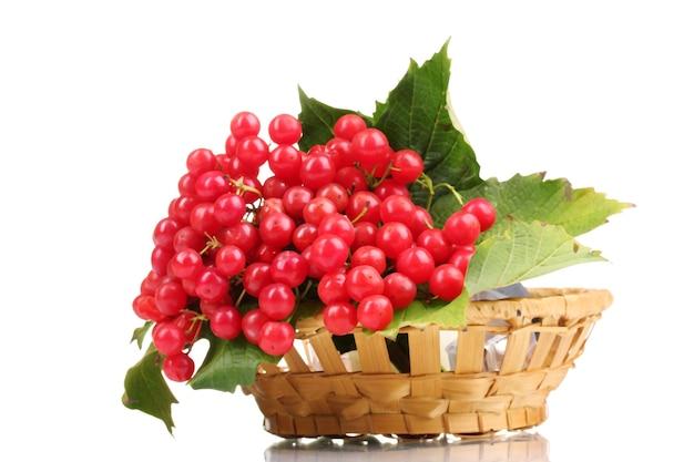 Czerwone jagody kaliny w koszu na białym tle