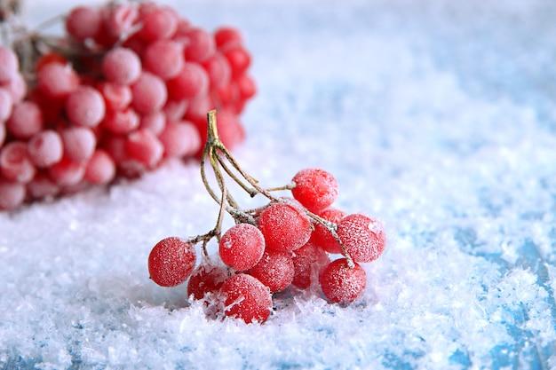 Czerwone jagody kaliny z kryształkami lodu na niebieskim tle