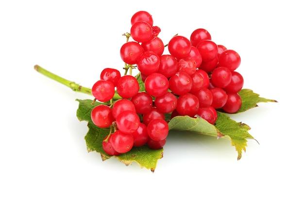 Czerwone jagody kaliny z liściem na białym tle