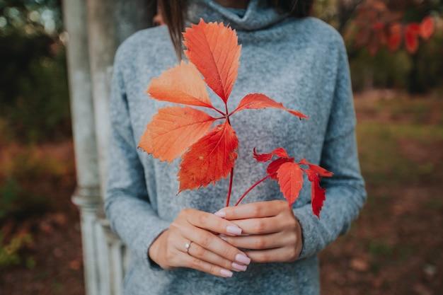 Czerwone jesienne liście w rękach dziewczyny w lesie