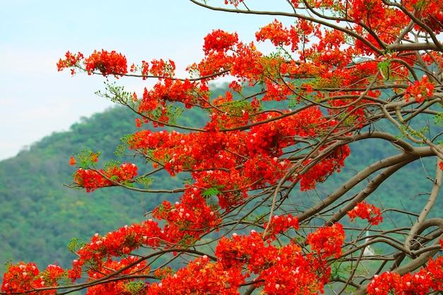 Czerwone kwiaty na drzewie w parku