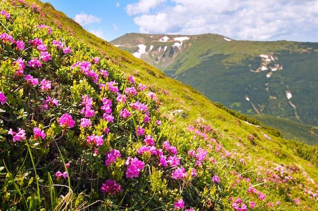 Czerwone kwiaty na letnim zboczu góry