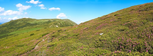 Czerwone kwiaty rododendronów na zboczu góry latem. sześć zdjęć ściegu.
