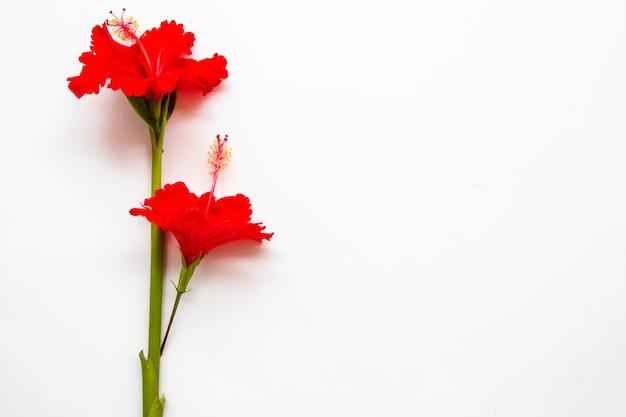 Czerwone kwiaty układ hibiskusa w stylu pocztówki