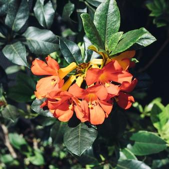 Czerwone kwiaty, zielone liście.