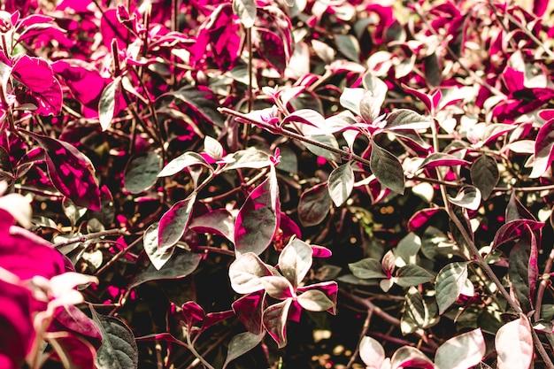 Czerwone liście jesieni