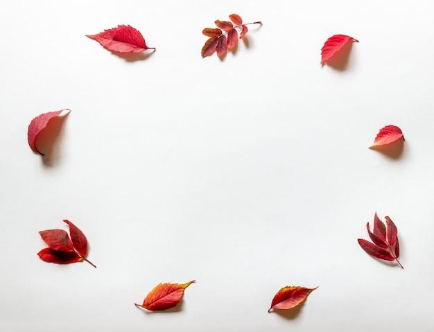 Czerwone liście na białym. jesień.