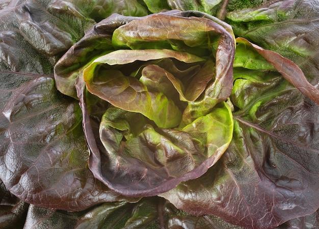 Czerwone liście sałaty z bliska