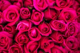 Czerwone róże teksturowanej tło