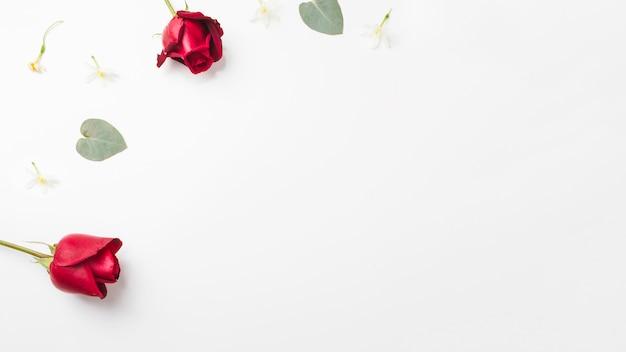 Czerwone róże i liść na kącie biały tło