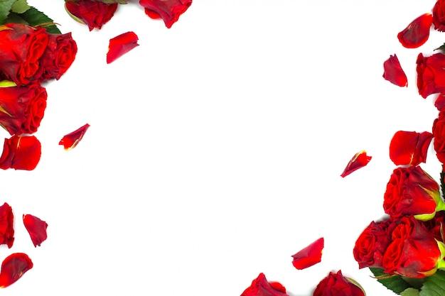 Czerwone róże i płatki na bielu
