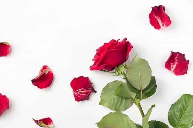 Czerwone róże i płatki róż