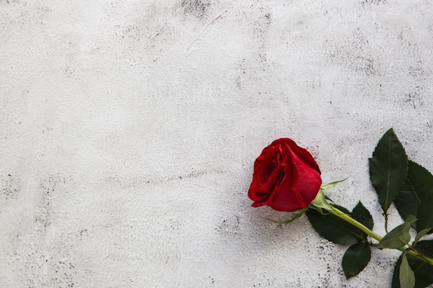 Czerwone róże na szarym tle kamienia. koncepcja miłości walentynki.