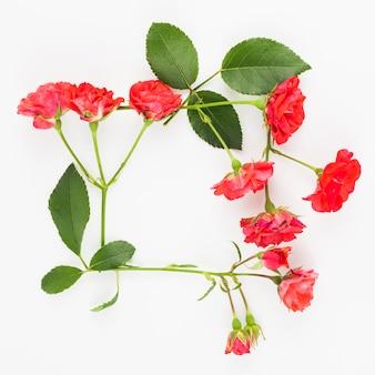 Czerwone róże obramiają na białym tle