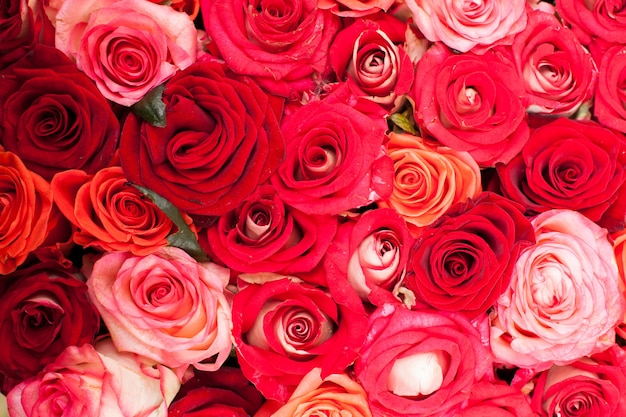 Czerwone róże w tle