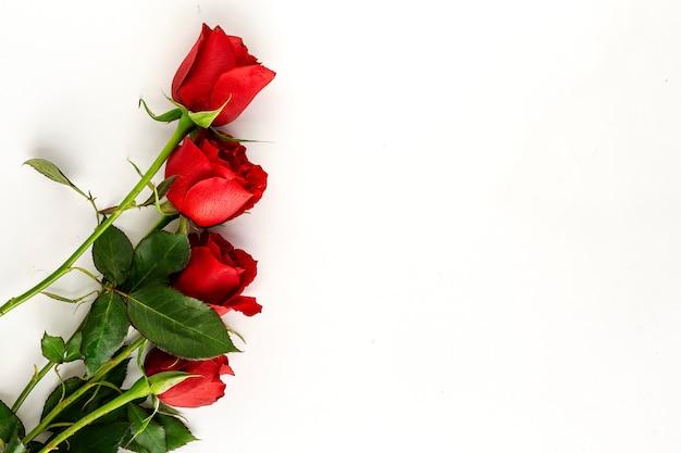 Czerwone róże z białym tłem